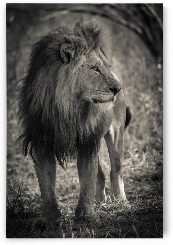 The King of South Africa - 3 by JADUPONT PHOTO