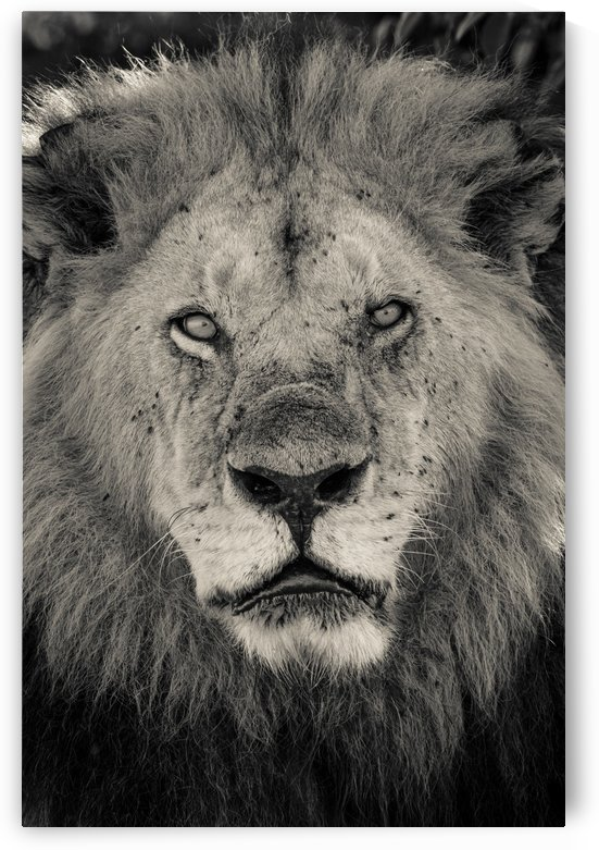 The King of South Africa - 2 by JADUPONT PHOTO