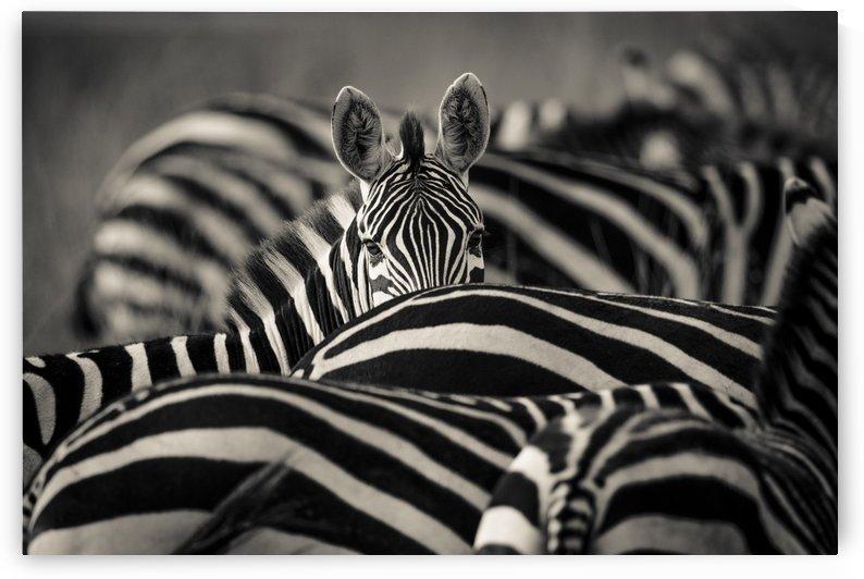 Between the Lines by JADUPONT PHOTO