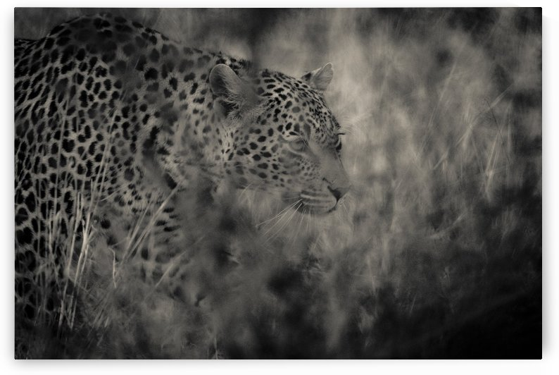Hunter by JADUPONT PHOTO