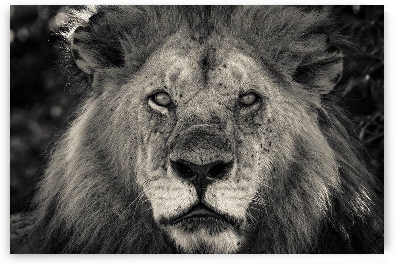 The King of South Africa - 1 by JADUPONT PHOTO