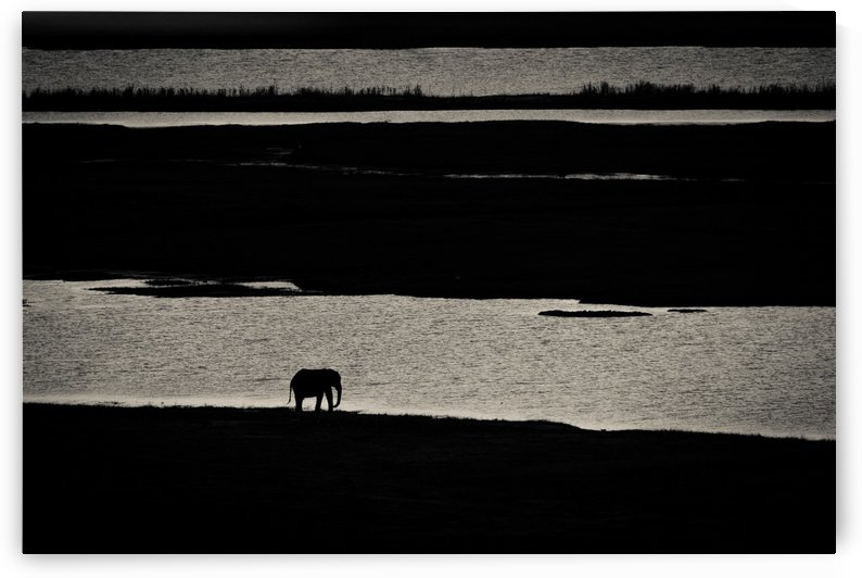 Chobe River Elephant by JADUPONT PHOTO