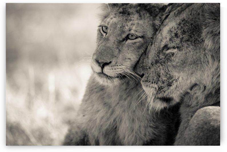 Tenderness by JADUPONT PHOTO