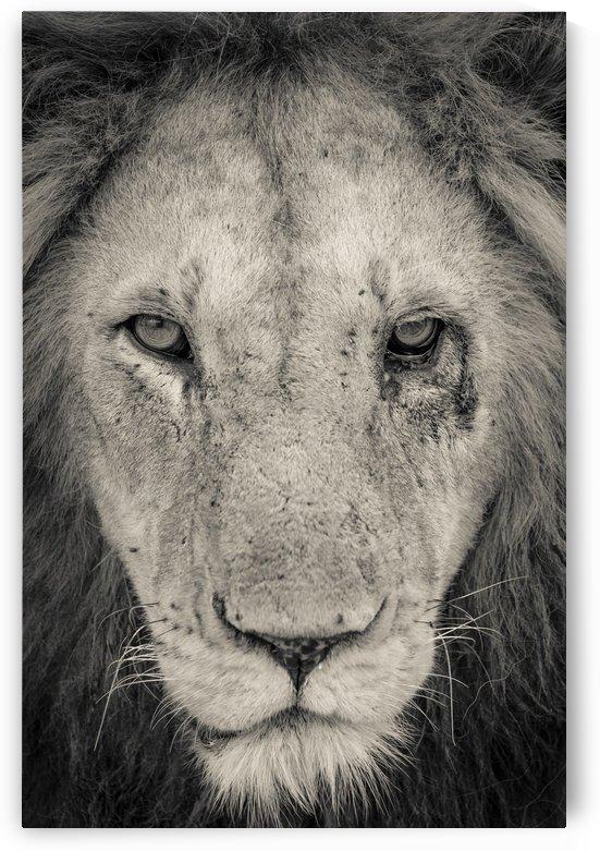 Tough Guy by JADUPONT PHOTO