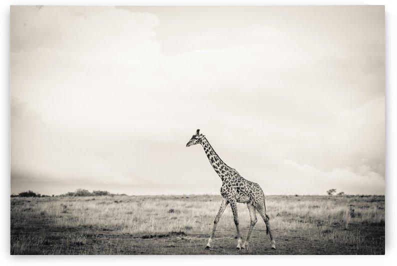 Zebrascape by JADUPONT PHOTO