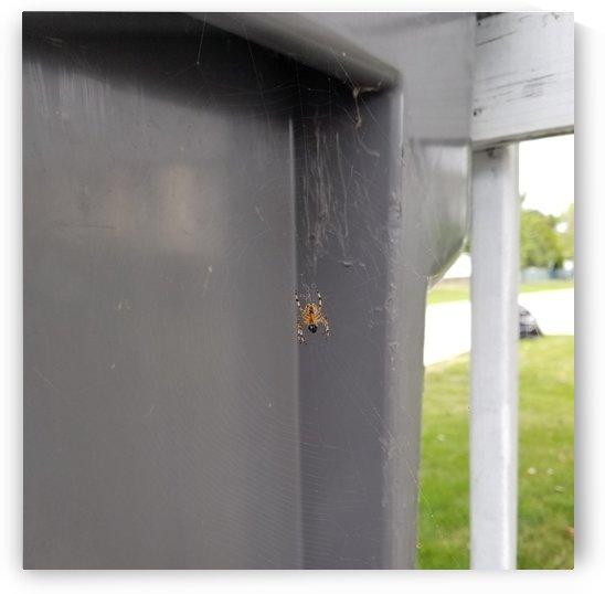 Spider bin by Wendy A Rohn