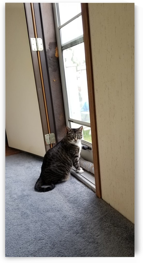 Lookin out the back by Wendy A Rohn