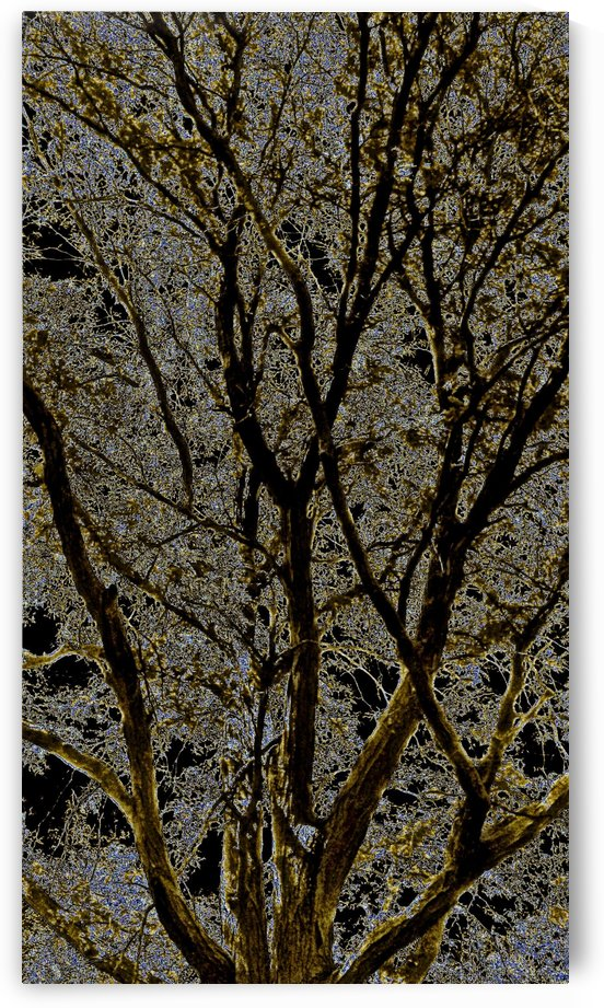 Art branches of Blackish Gold by Jeremy Lyman