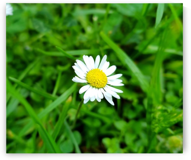 FLOWER 1 by kitso