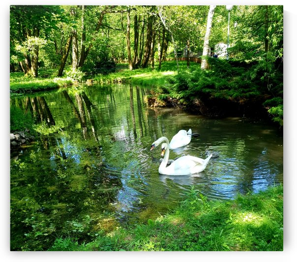 swan 7 by kitso