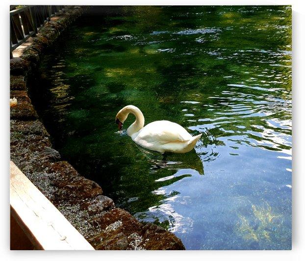swan 13 by kitso