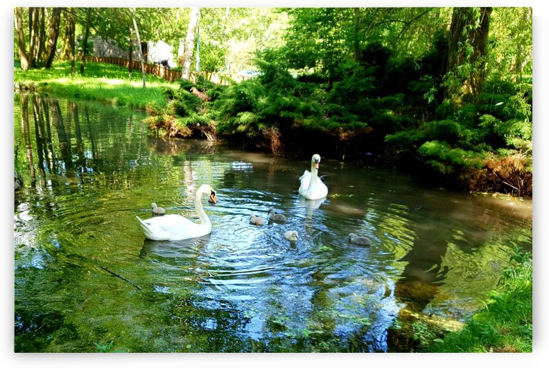 swan 11 by kitso