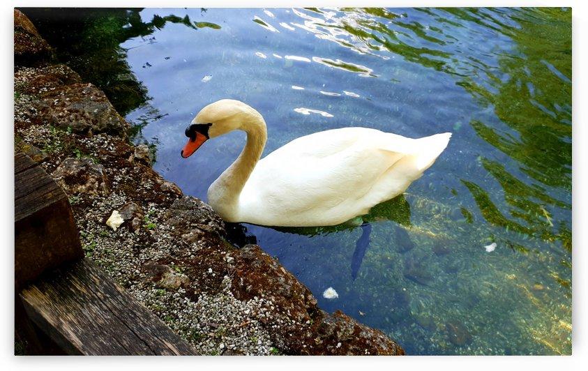 swan 16 by kitso