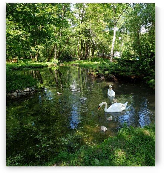 swan 1 by kitso