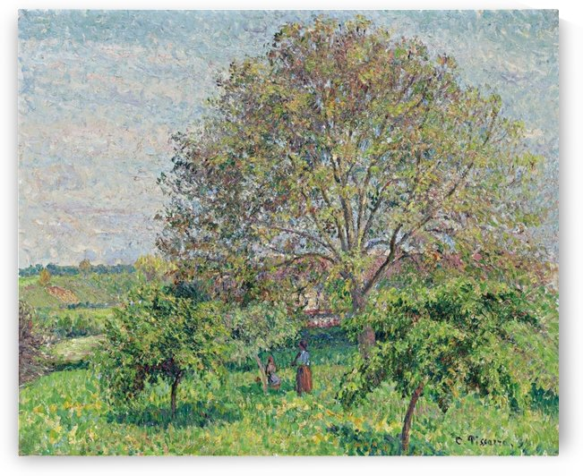 Great Nut-Tree in Spring, Eragny by Camille Pissarro