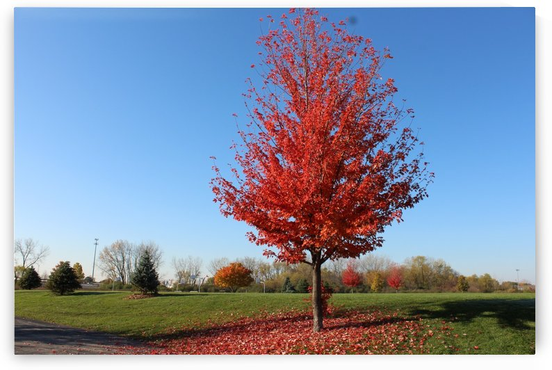 Fall Color Red by Lalitha Murali