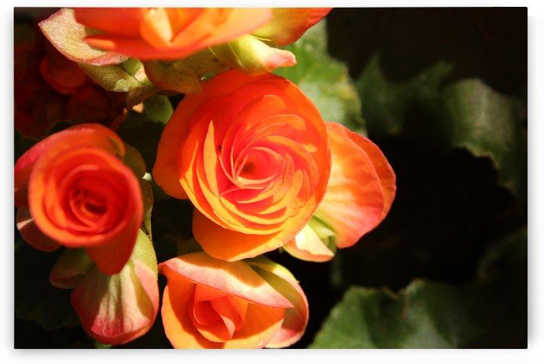 IMG_3593 by Lalitha Murali