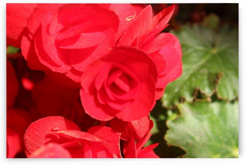 IMG_3618 by Lalitha Murali