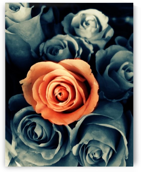 Roses by Lalitha Murali