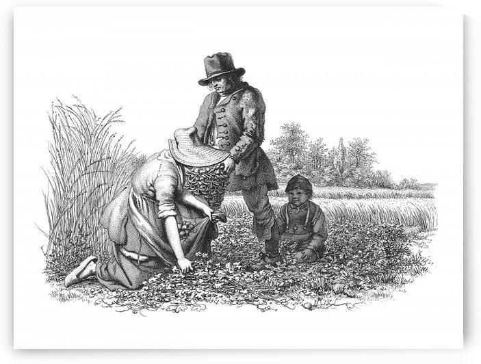 Harvesting Crops_OSG by One Simple Gallery