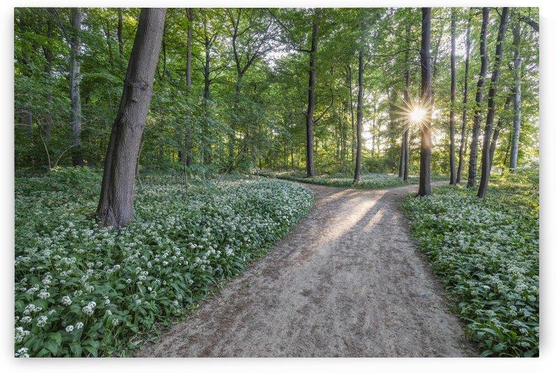 Wild Garlic Path by Patrice von Collani