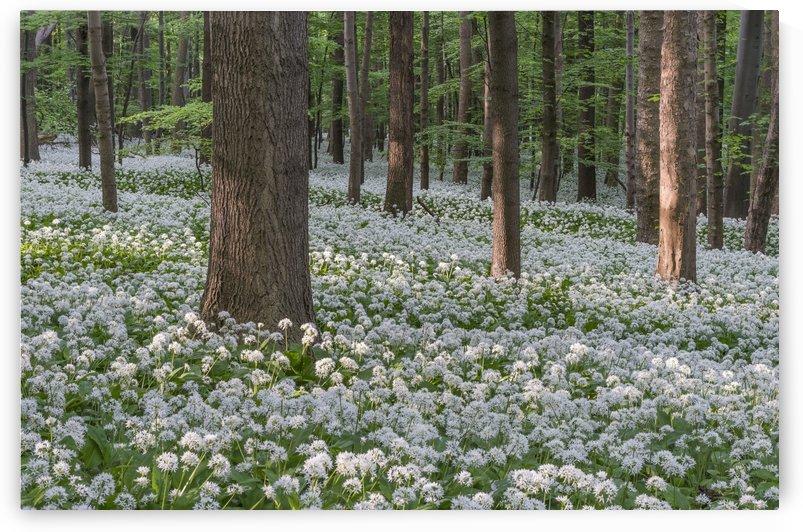 Wild Garlic Flowers Dream by Patrice von Collani