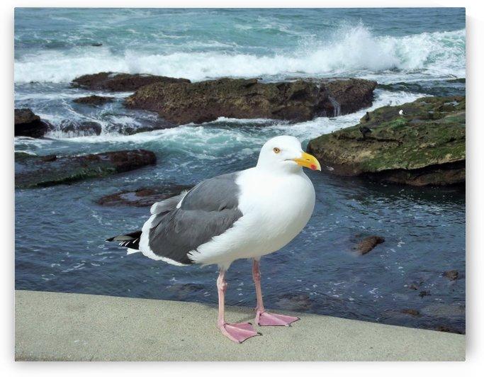 Seagull Sea View by Linda Peglau