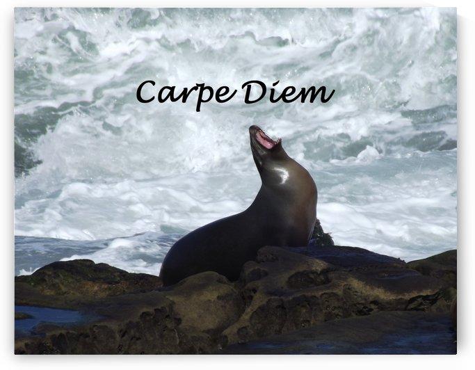 Carpe Diem  by Linda Peglau