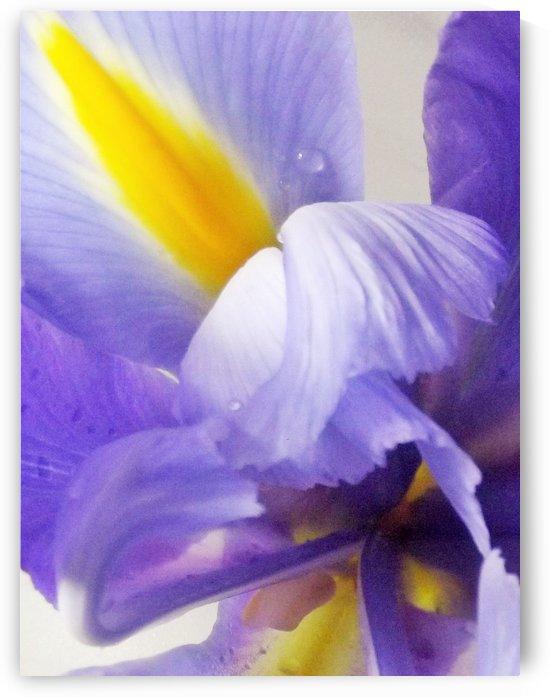 Inner Iris by Linda Peglau