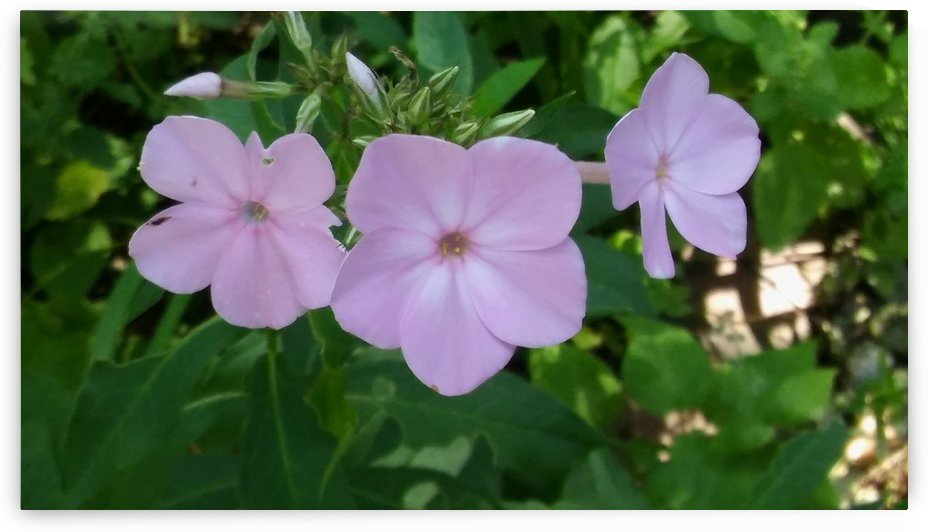 Small Purple Flowers by SarahJo Hawes
