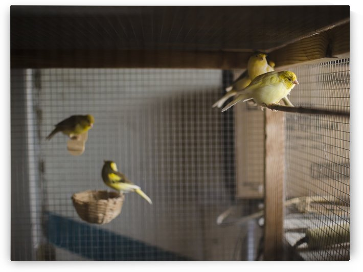 Caged by Vlad Kochanzhi