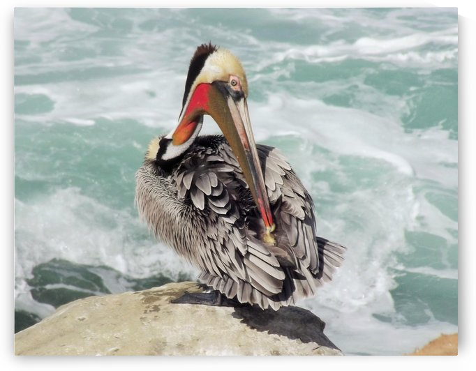 Pelican Wave by Linda Peglau