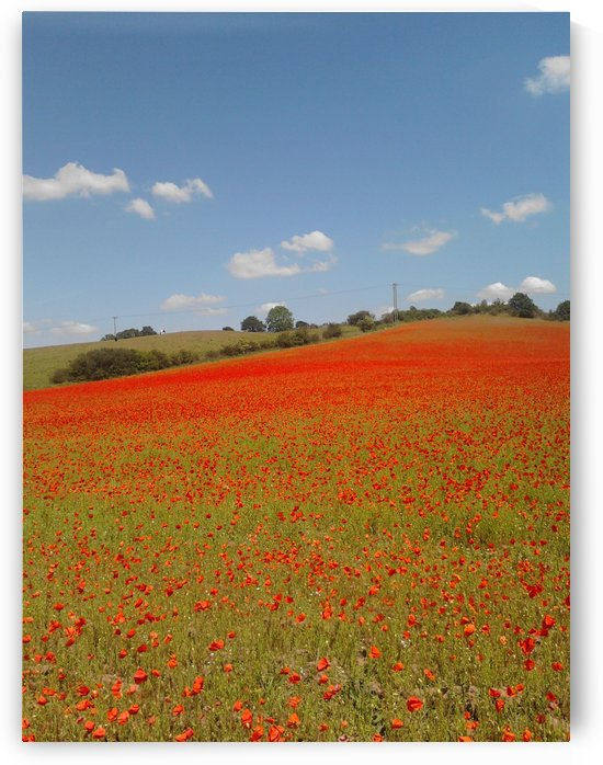 Remembrance Field by Sara Jennings