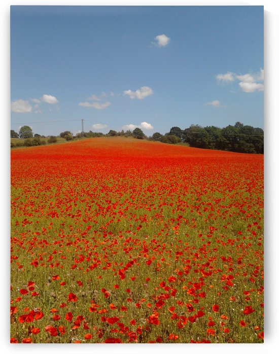 Poppy Fields by Sara Jennings