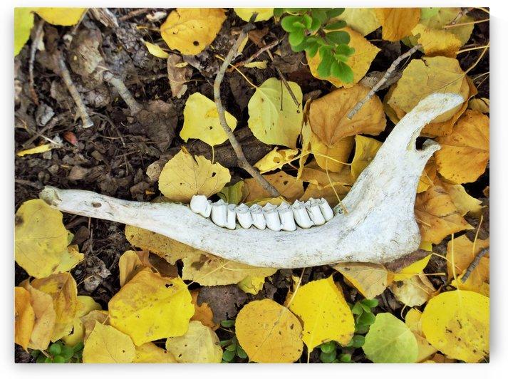 Animal Jawbone In Aspen Leaves by Linda Peglau