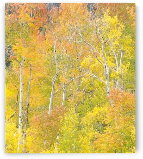 Changing Aspens - Vail Colorado by Linda Peglau