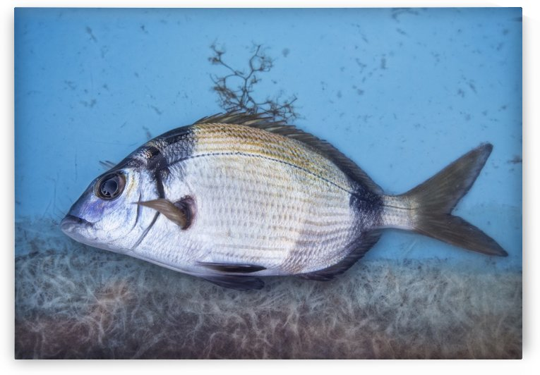 Fish by Photure