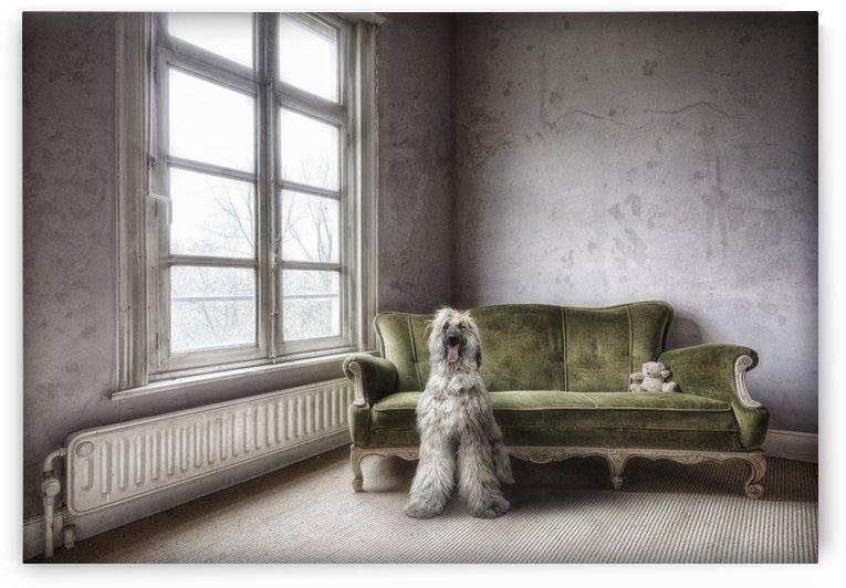 Dogfaith by Photure