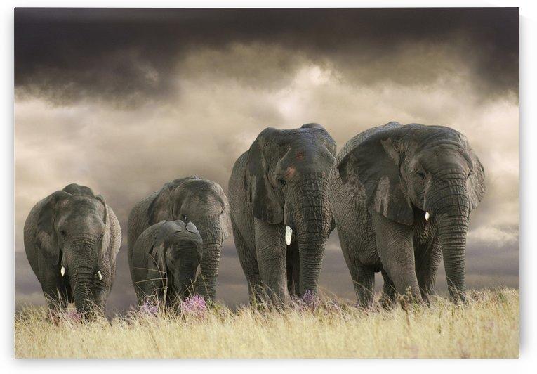 Five big ones by Photure