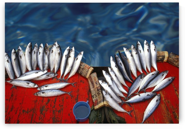 Freshfish by Photure