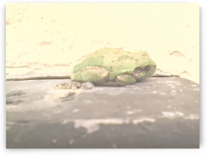 Hello frog by Wendy A Rohn