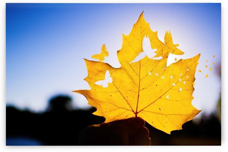 Fall Feathers by Vlad Kochanzhi