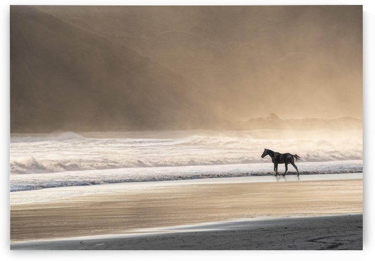 Freehorse by Photure