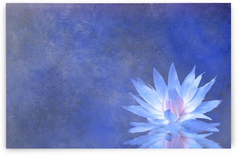 Lotus Blossom by Bruce Rolff