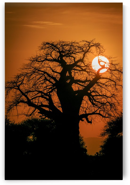 Baobab Sunset by JADUPONT PHOTO