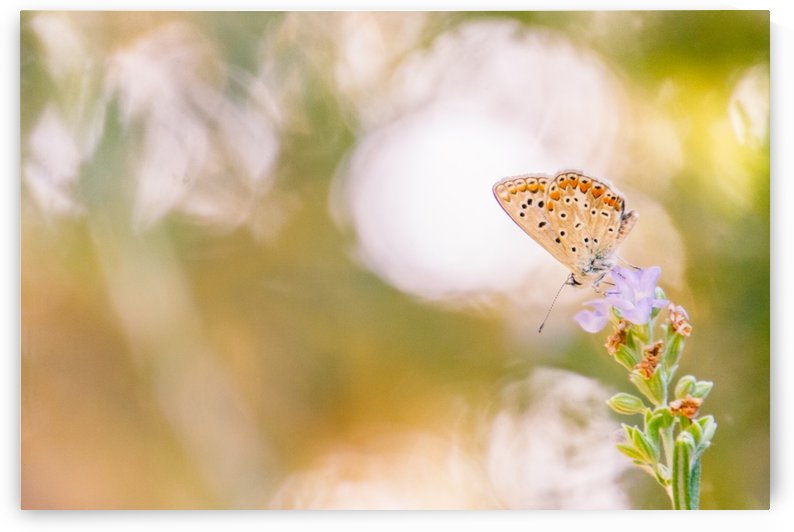 Butterfly by Laura Diara