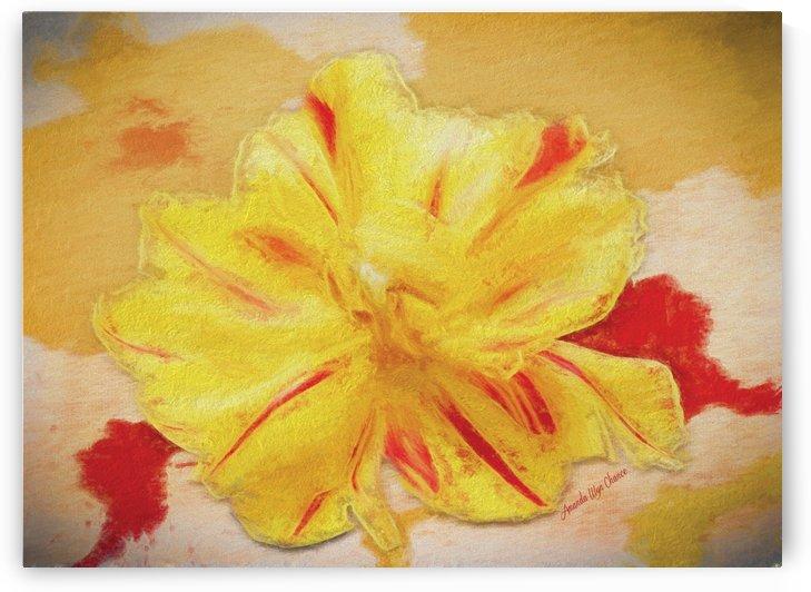 Yellow Storm by AMANDA WYN CHANCE