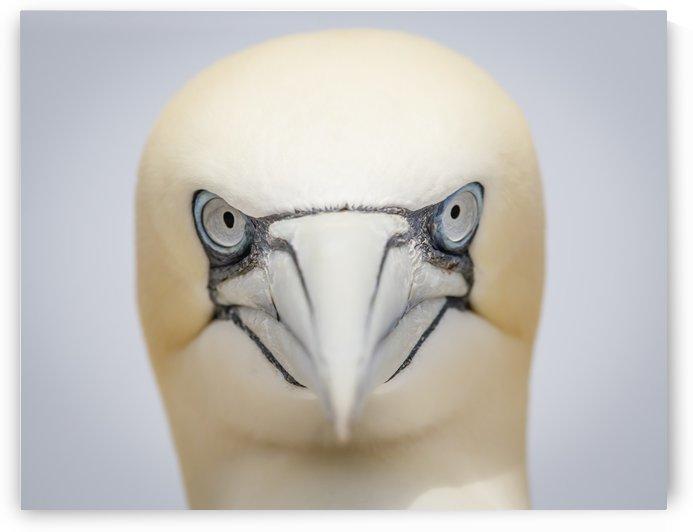 Angry Bird by JADUPONT PHOTO