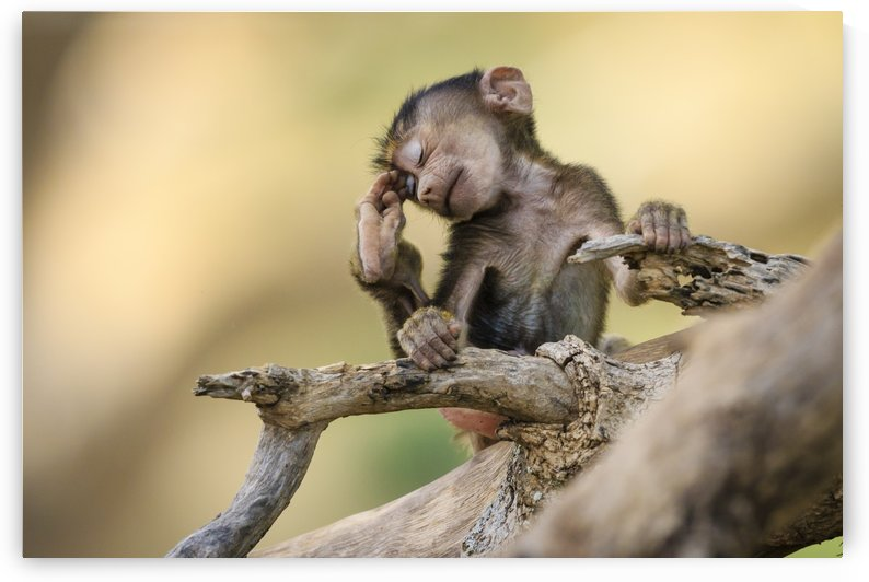 Little Thinker by JADUPONT PHOTO