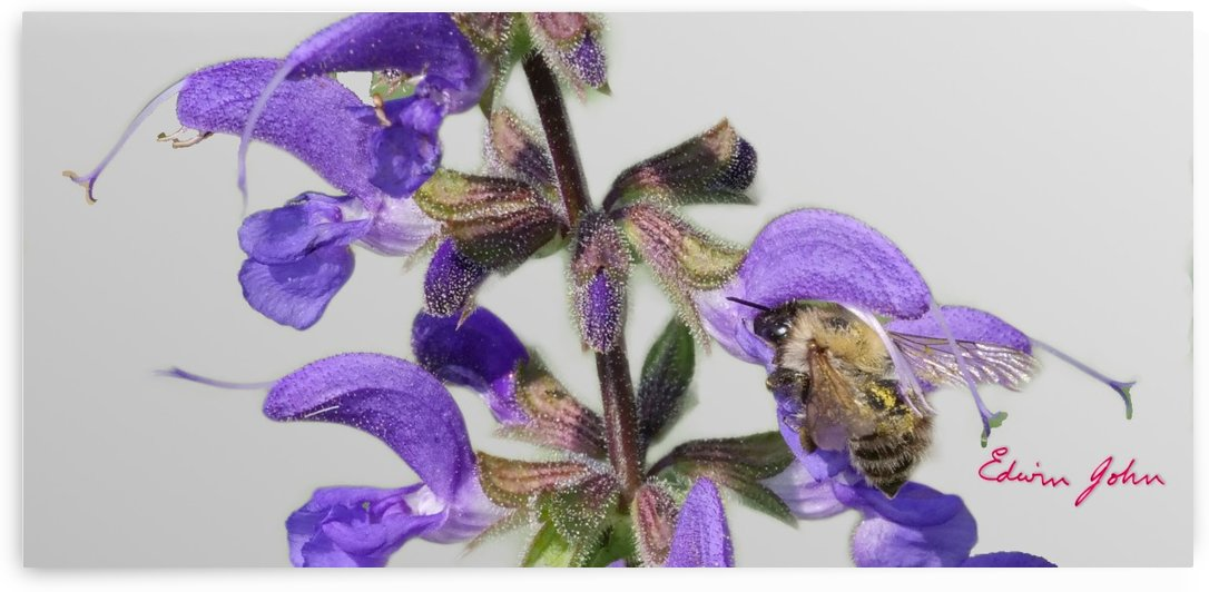 Bees make Honey by Edwin John